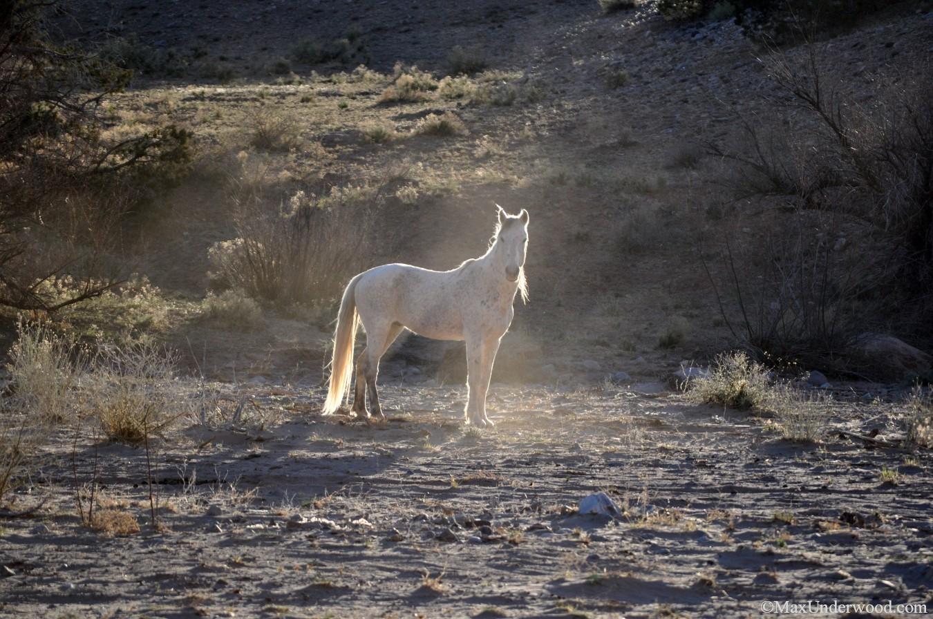 White wild horse, New Mexico, Southwest landscapes. Wildlife photography.