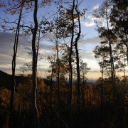 Aspens at sunset, Santa Fe Mountains, NM, fall leaves, landscapes.