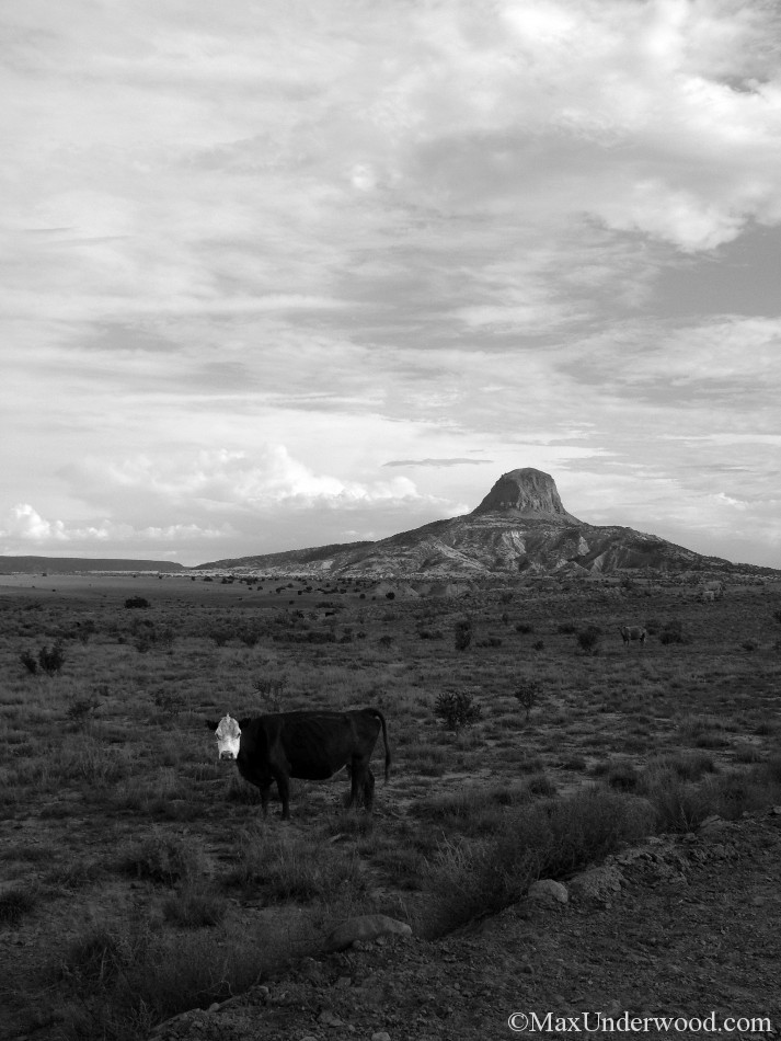 Cabezon Mountain with cow, New Mexico, Southwest Landscapes