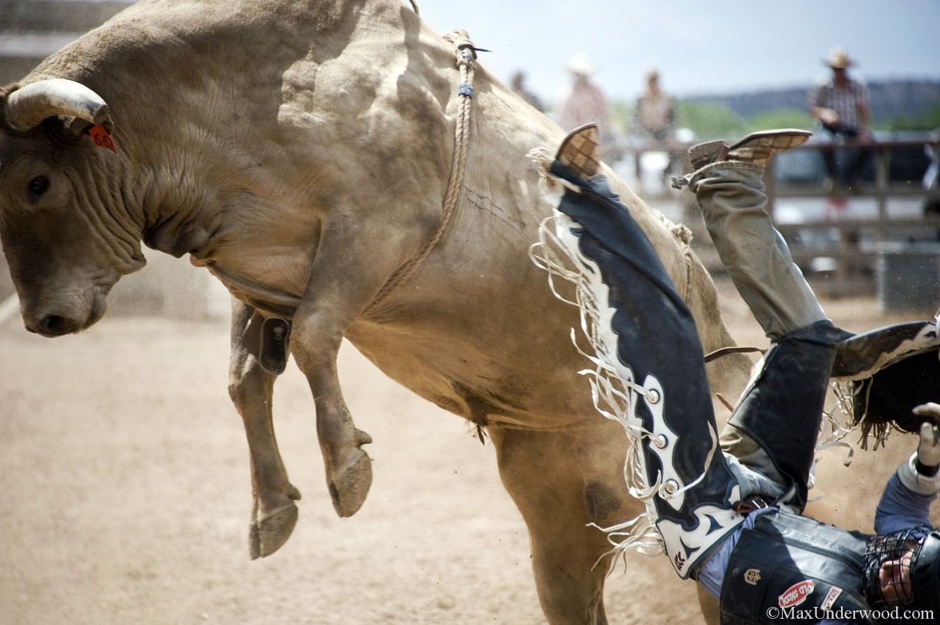 Rodeo de Galisteo, New Mexico, 2013. Bull riding, bull bucking. Action photography, Sport photography.