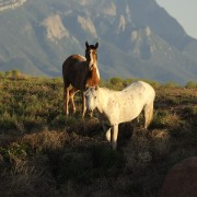 Wild Life, horses, wild horses, New Mexico
